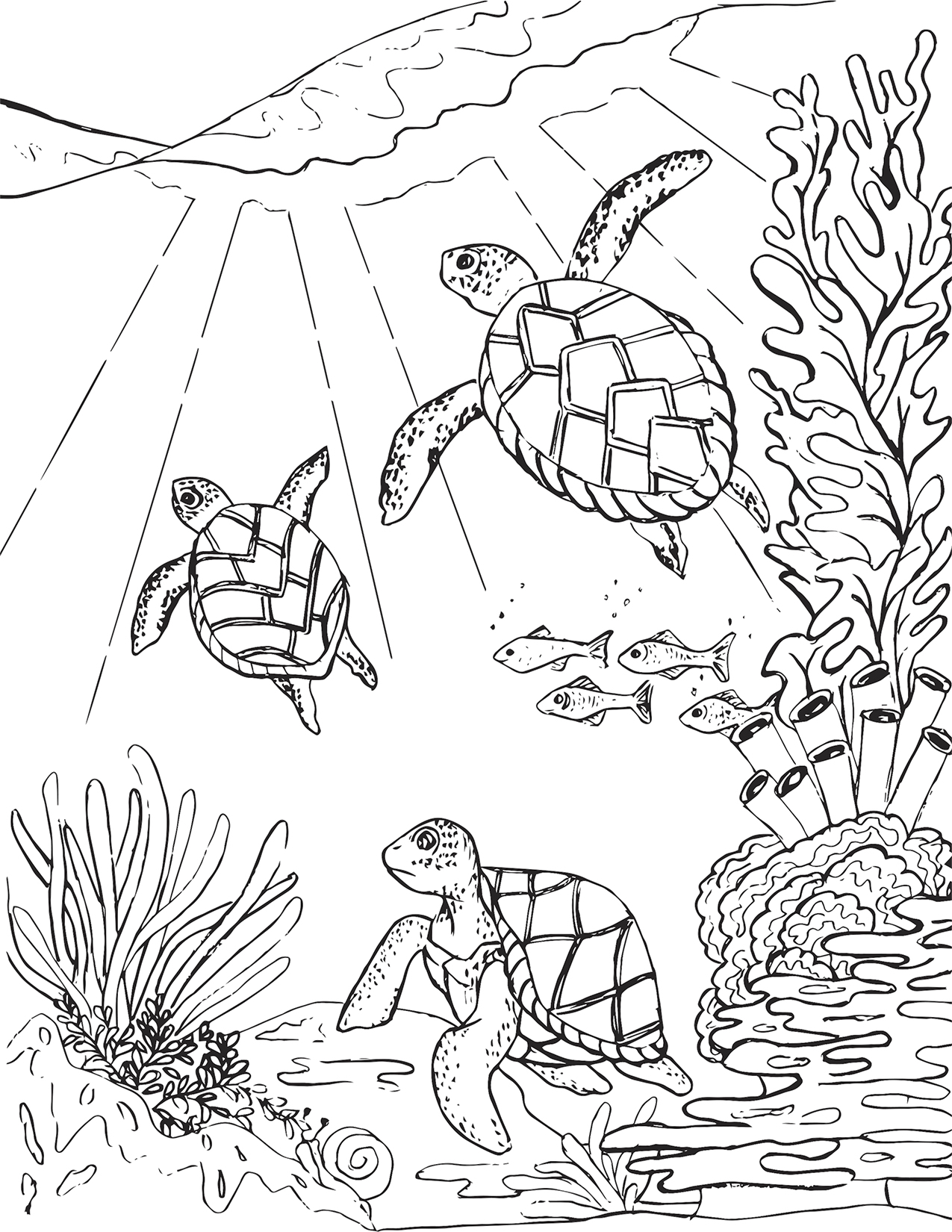 - Three Sea Turtles Coloring Page – Mermaid Coloring Pages